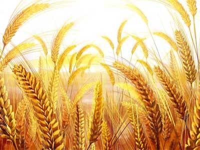 一块地,不适合种麦子,可以试试种豆子(世界上没有一个人是废物,只不过没有放对位置!)